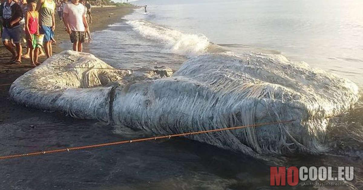 A tudódok által sem ismert lényt sodort partra a víz, amitől jelenleg mindenki retteg!