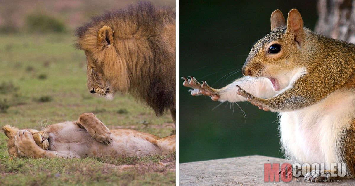 20+ vicces kép, ami bizonyítja, hogy az állatvilágban is létezik humor