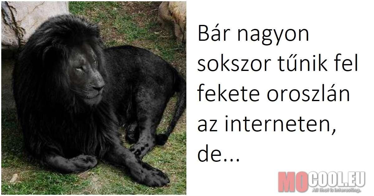 18 dolog, amit nem tudtál az oroszlánokról