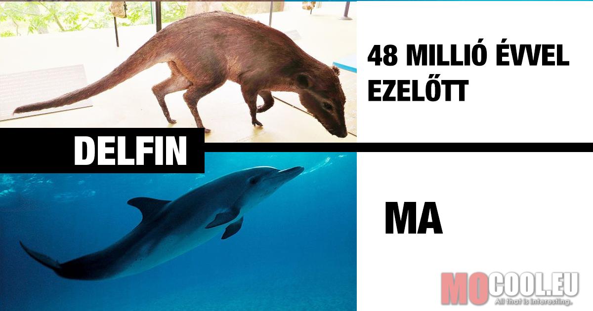 11 ismert állat, melyek teljesen máshogy néztek ki a múltban