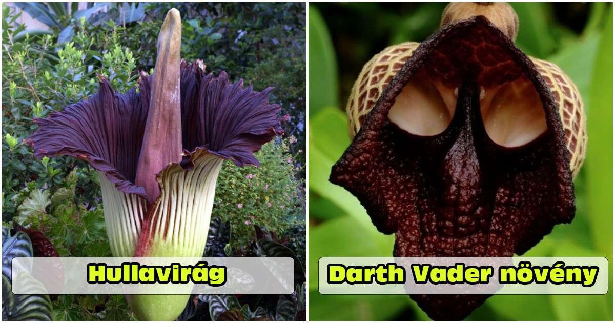 15 különleges növény, amelyek olyanok mintha egy idegen bolygóról származnának