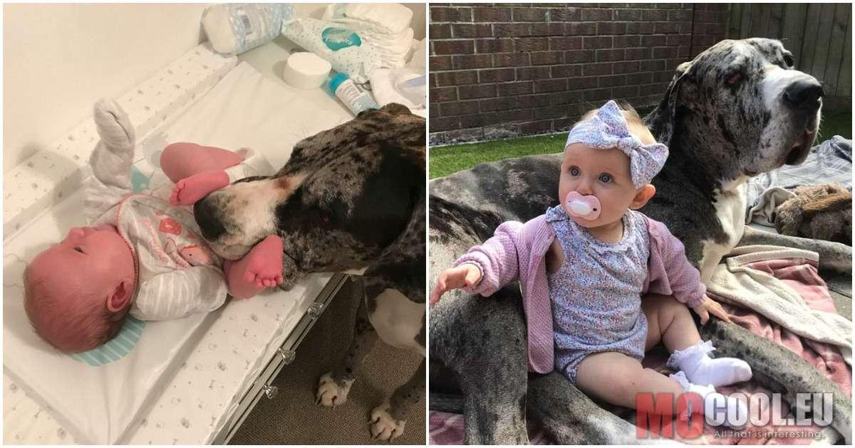 A kisbaba legjobb barátja lett a család 90 kilós kutyája – Az állat egy lépést sem tesz a kislány nélkül