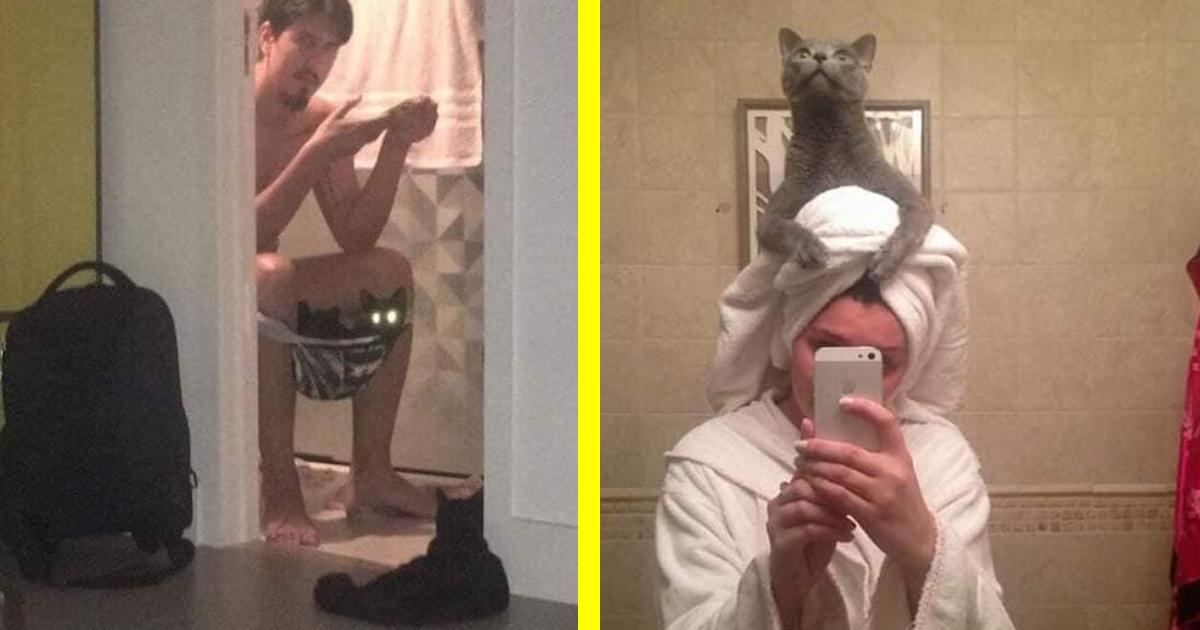 25 vicces kép, ami bizonyítja, hogy a macskák nem tudják mit jelent a privát szféra