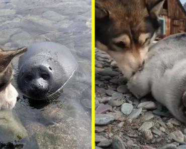 A nap hőse! Kutya mentett meg egy sérült bébifókát a Bajkál-tónál